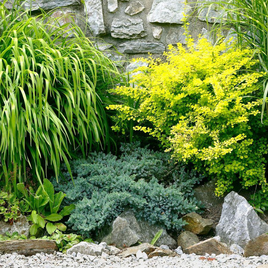 Shrubs In The Garden Wall
