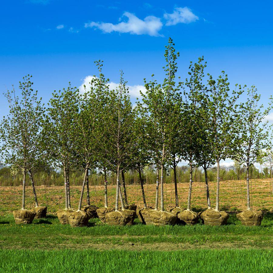 Leaf Trees Nursery